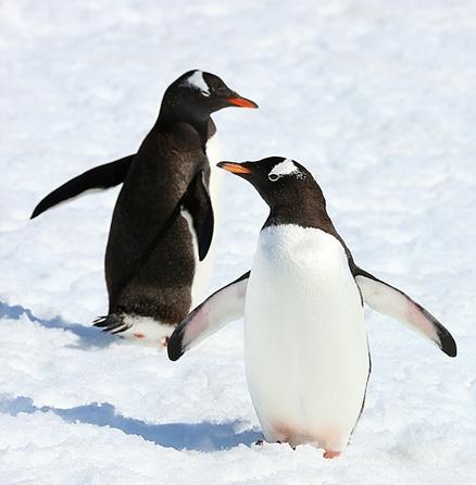 露营南极 与萌萌哒企鹅共度一夜